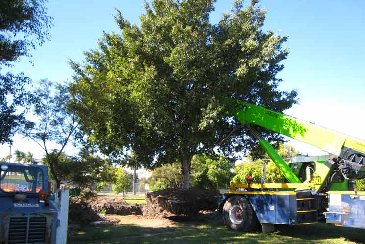 Howard Springs Arborist