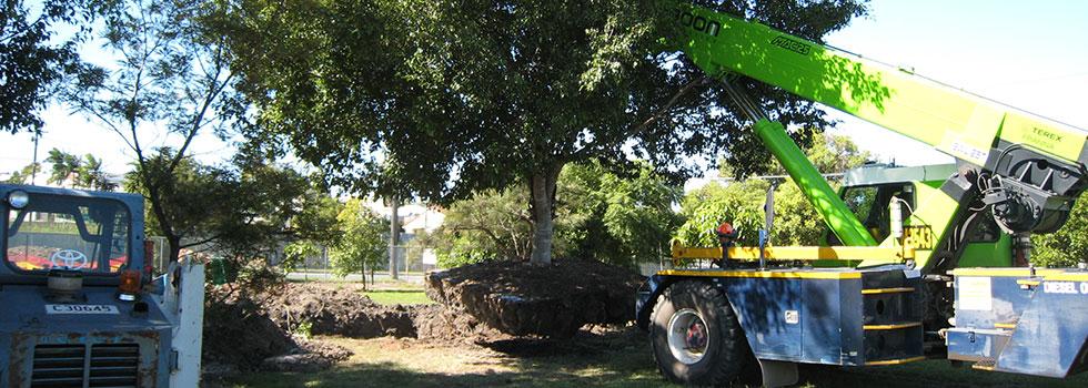 Kwikfynd Arborist 6