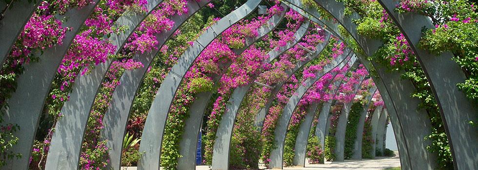 Kwikfynd Bali style landscaping 12