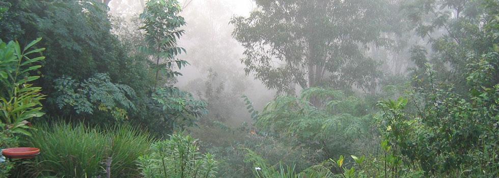 Kwikfynd Bali style landscaping 4