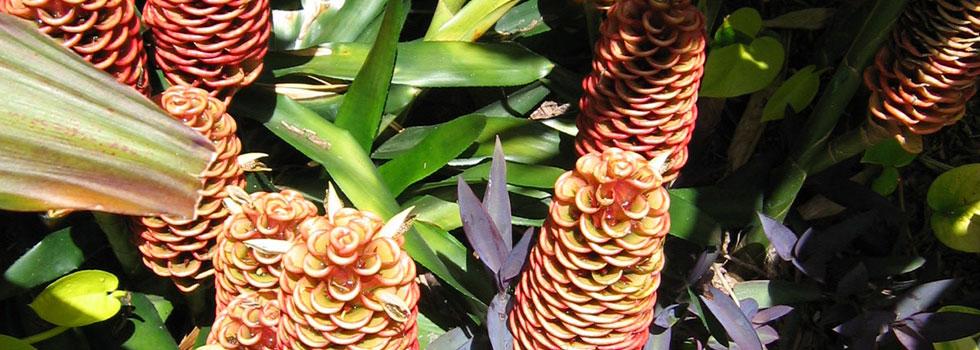 Kwikfynd Bali style landscaping 8