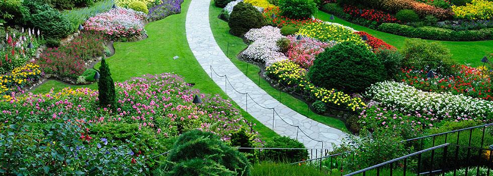 Kwikfynd Garden maintenance 26