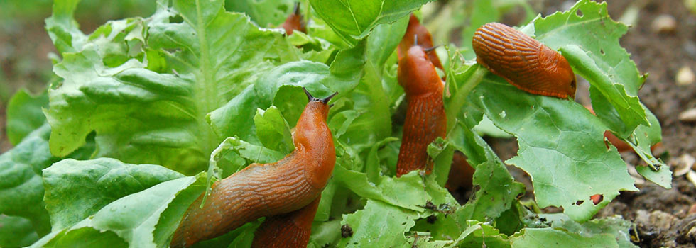 Kwikfynd Garden maintenance 33
