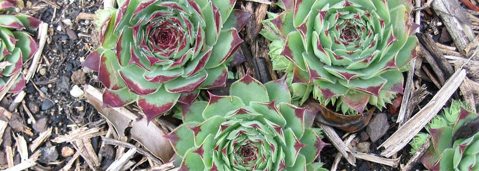 Kwikfynd Horticulturist 10