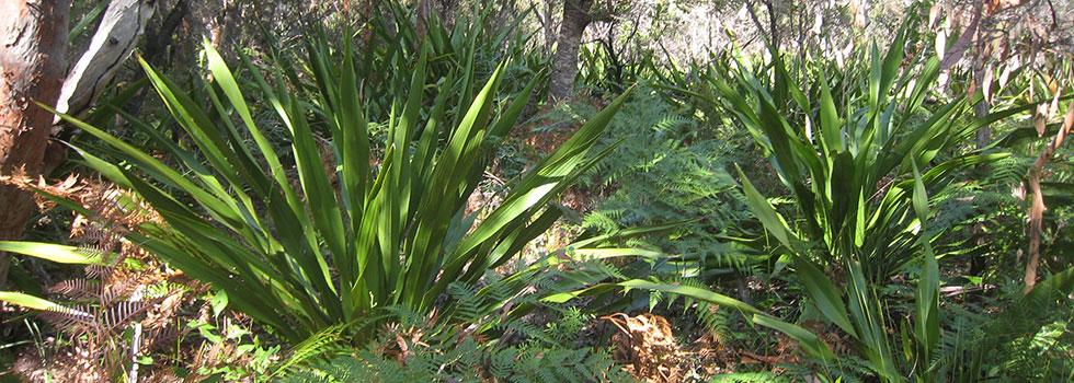 Kwikfynd Horticulturist 11