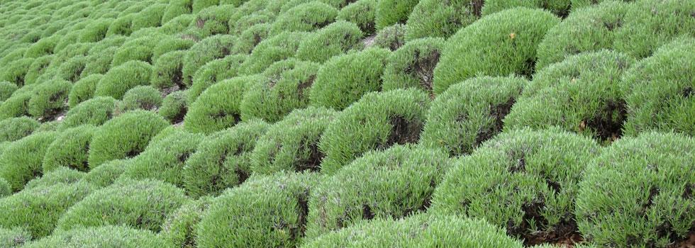 Kwikfynd Horticulturist 7