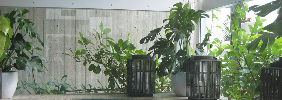 Kwikfynd Indoor planting 2