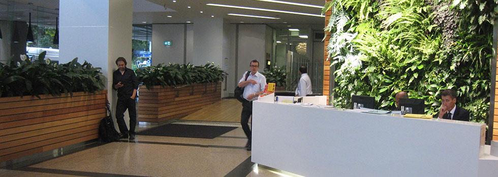 Indoor planting 4