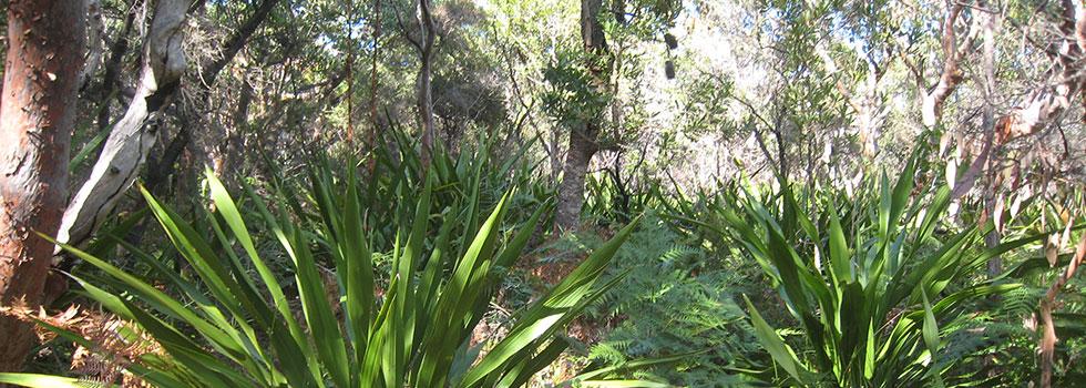 Kwikfynd Landscape consultants 22
