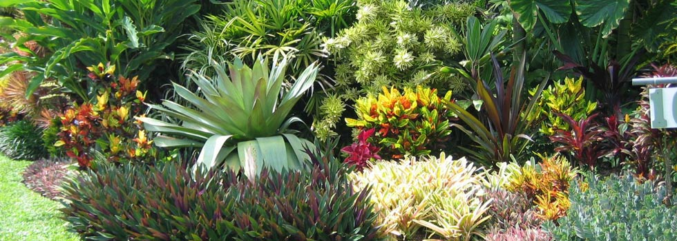Landscaping ideas for queensland pdf for Garden designs brisbane