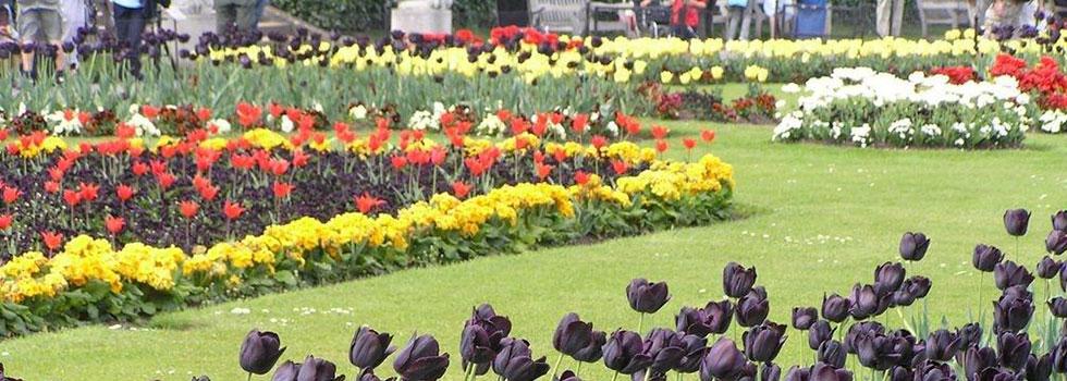 Kwikfynd Landscape gardener 25