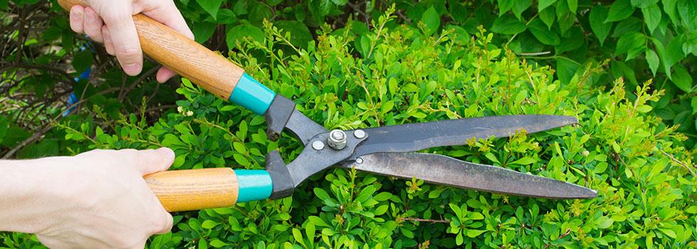 Landscape gardener 30