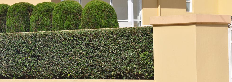 Landscape gardener 6