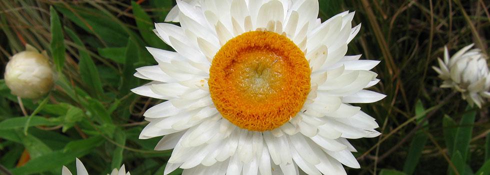 Kwikfynd Organic gardening 16
