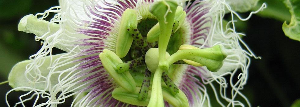 Kwikfynd Organic gardening 17