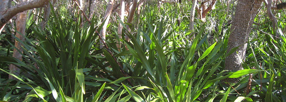 Kwikfynd Organic gardening 18