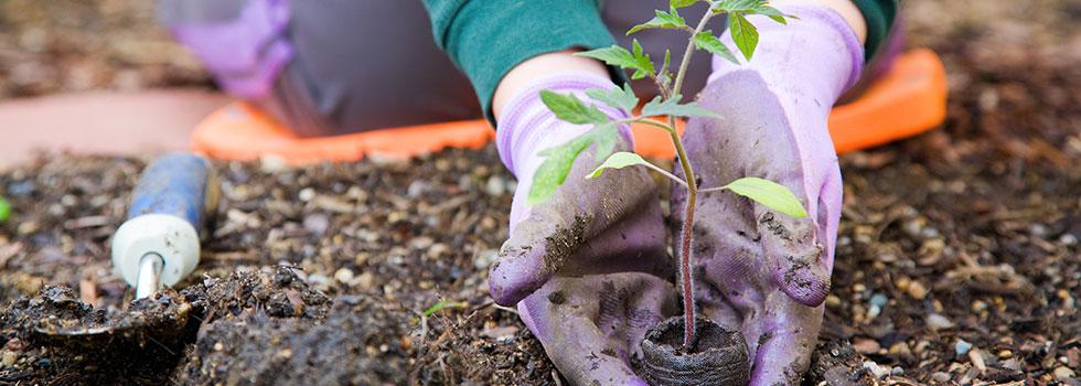 Kwikfynd Organic gardening 20