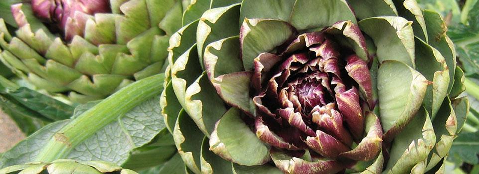 Kwikfynd Organic gardening 4