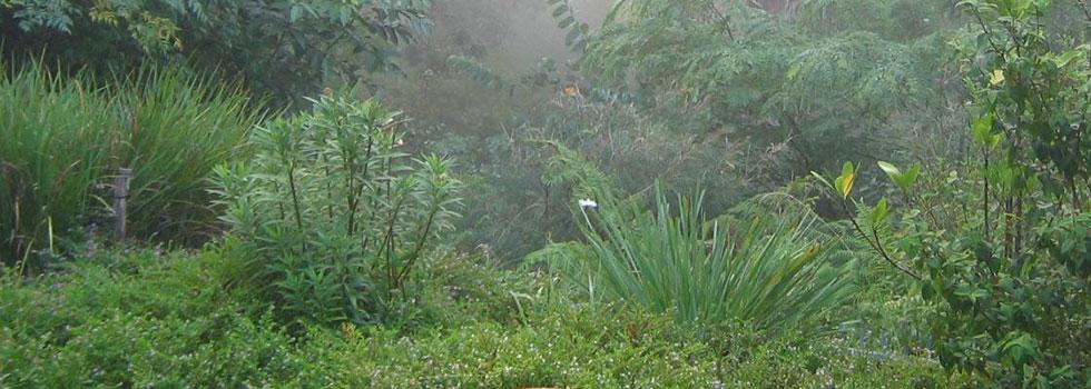 Kwikfynd Organic gardening 8