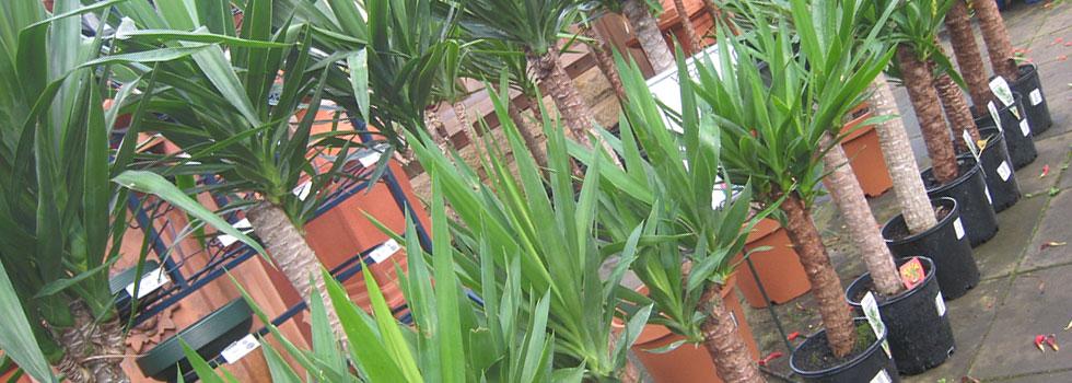 Plant nursery 10