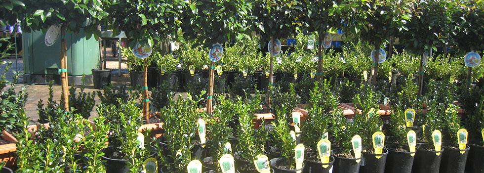 Plant nursery 14