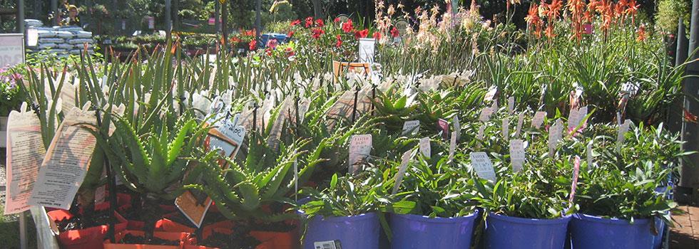 Kwikfynd Plant nursery 16