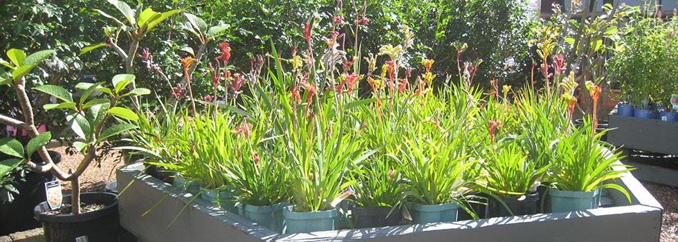 Kwikfynd Plant nursery 17