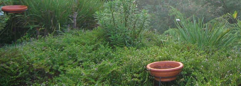 Plant nursery 21