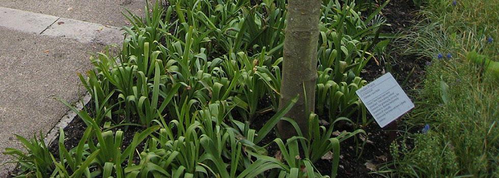 Plant nursery 23