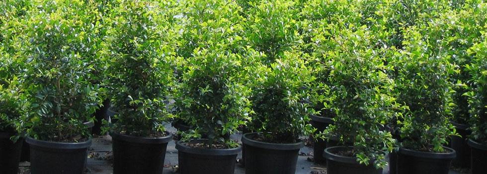 Plant nursery 24