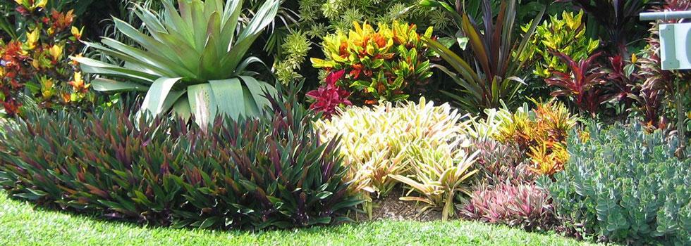 Plant nursery 25