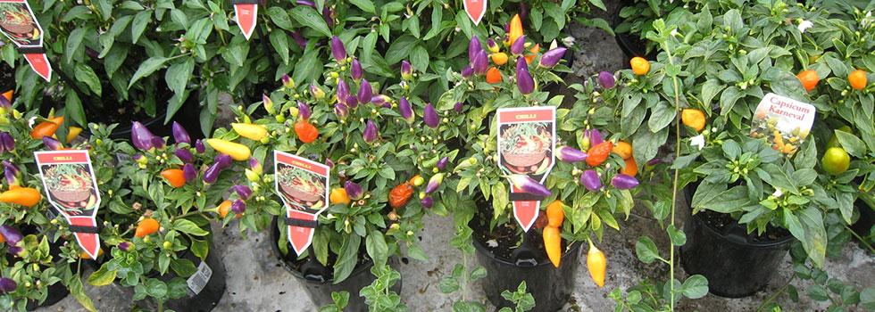 Plant nursery 27