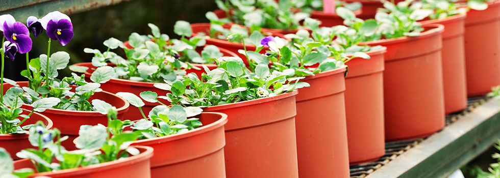 Plant nursery 31