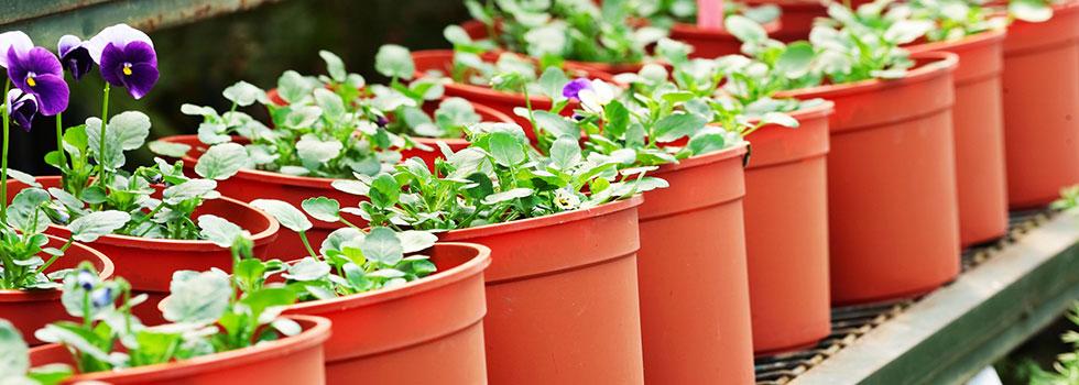 Kwikfynd Plant nursery 31