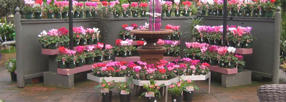 Plant nursery 4