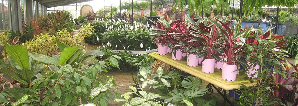Kwikfynd Plant nursery 7