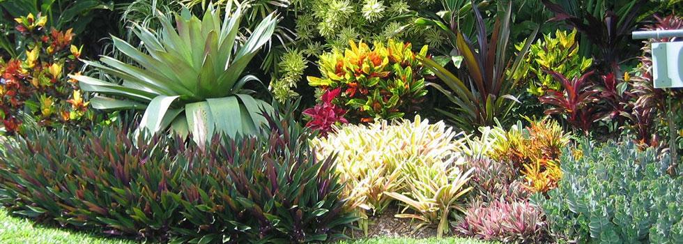 Kwikfynd Plants 10