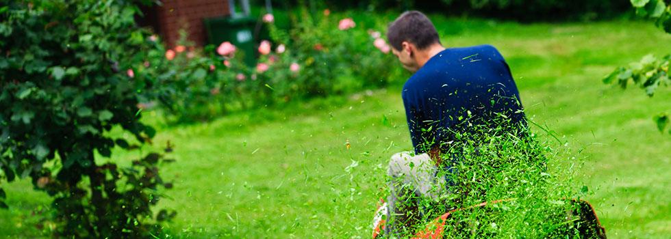 Kwikfynd Plants 100