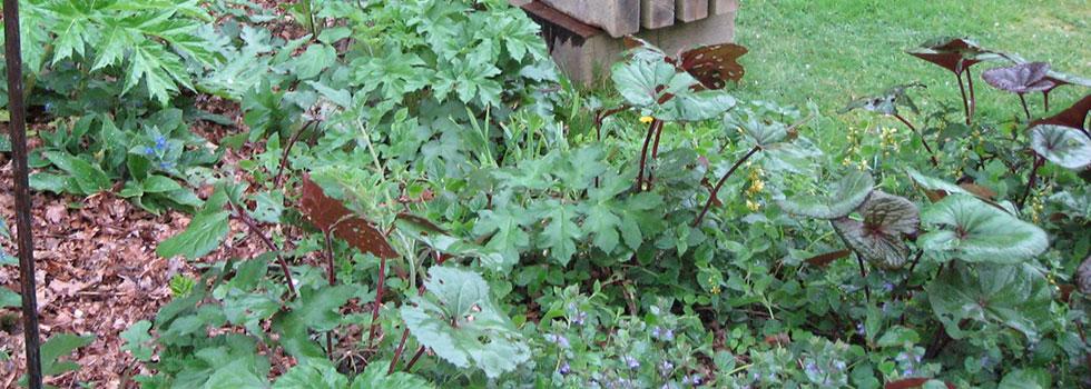 Kwikfynd Plants 14