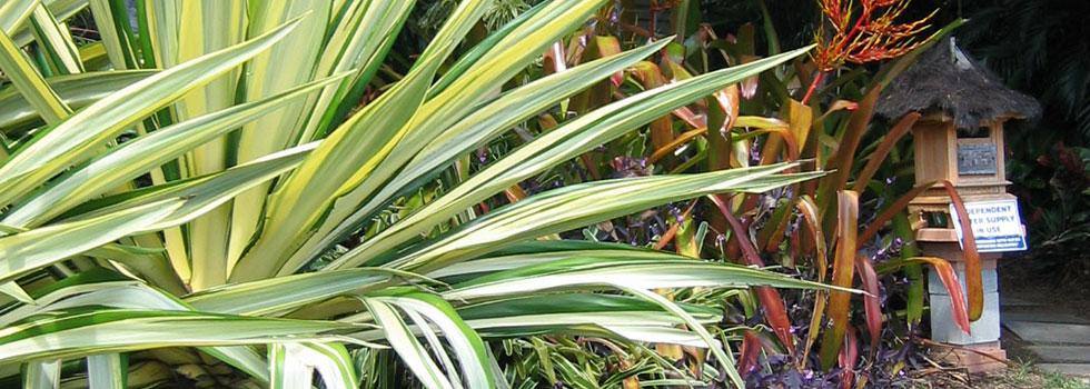 Kwikfynd Plants 16