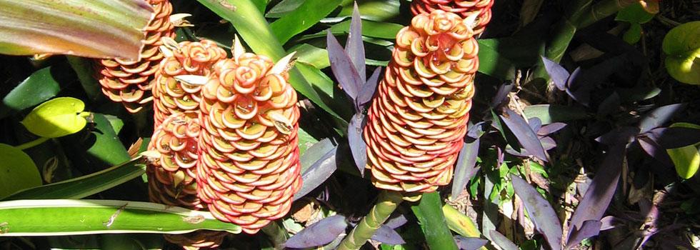 Kwikfynd Plants 20