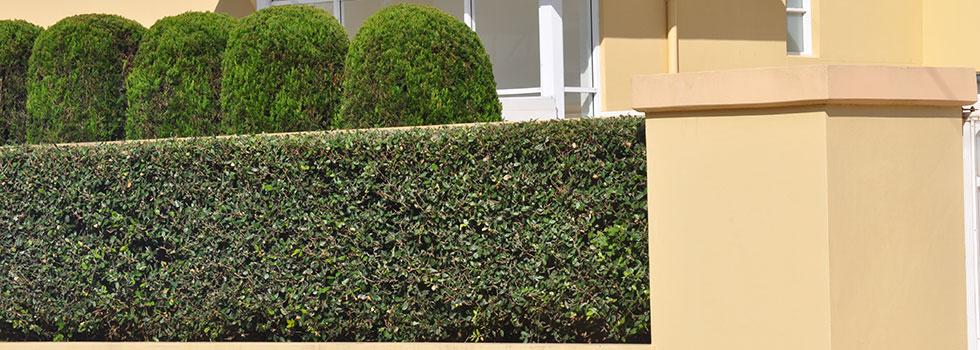 Kwikfynd Plants 21