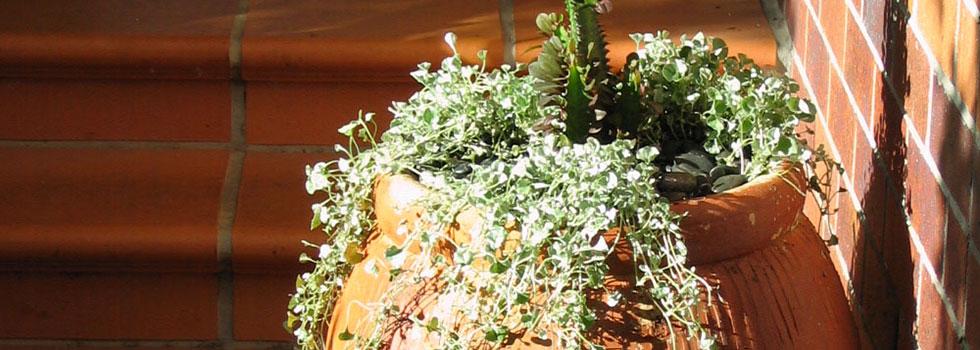 Kwikfynd Plants 27