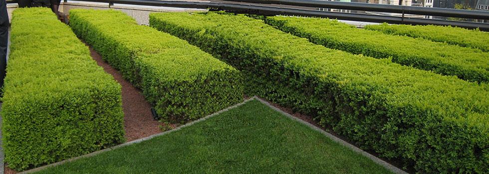 Kwikfynd Plants 28
