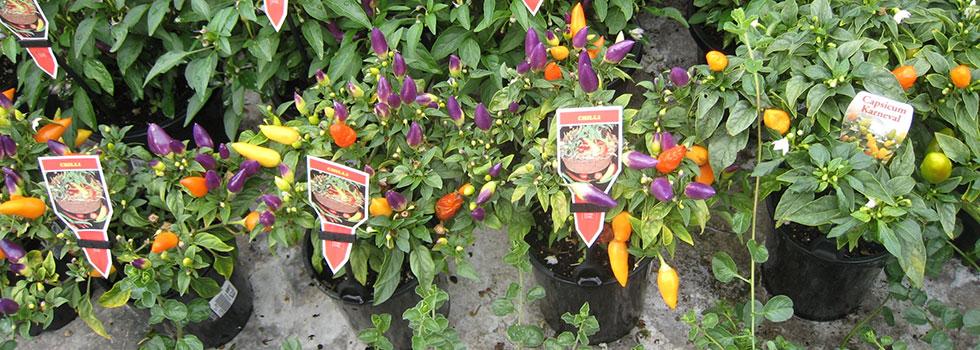 Kwikfynd Plants 30
