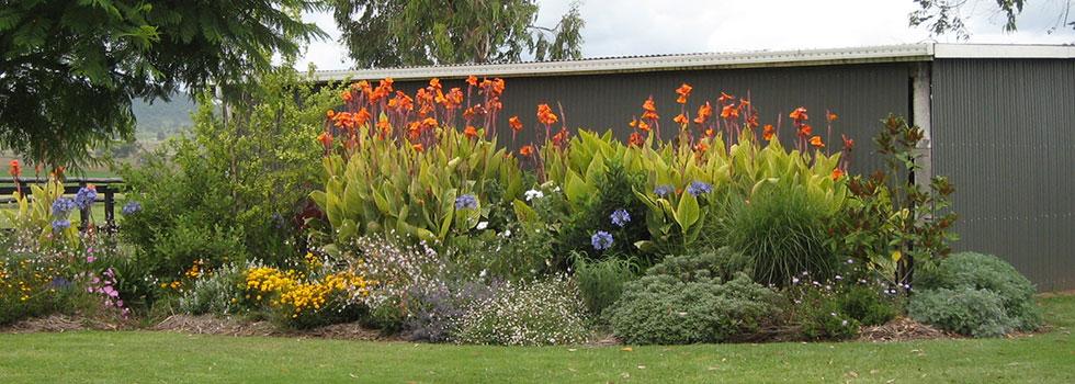 Kwikfynd Plants 31