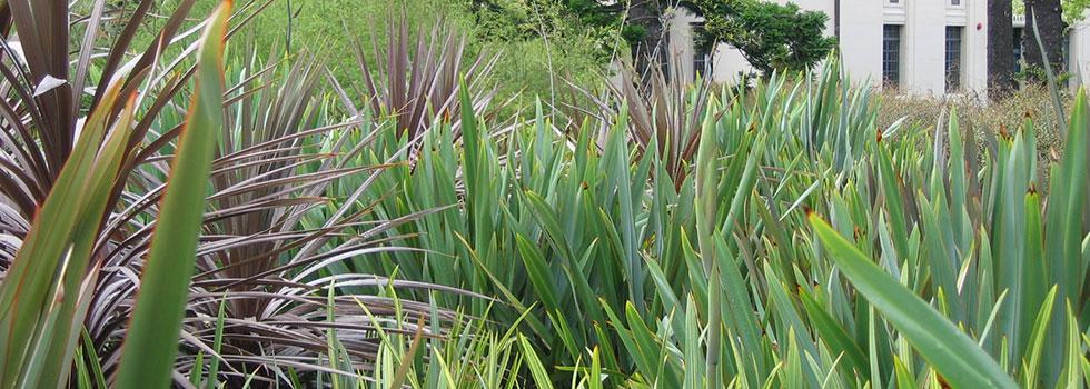 Plants 33