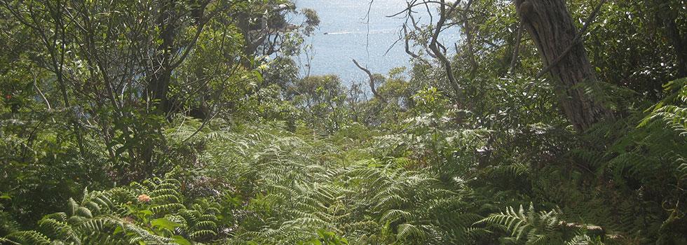 Kwikfynd Plants 35