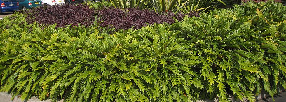 Kwikfynd Plants 37