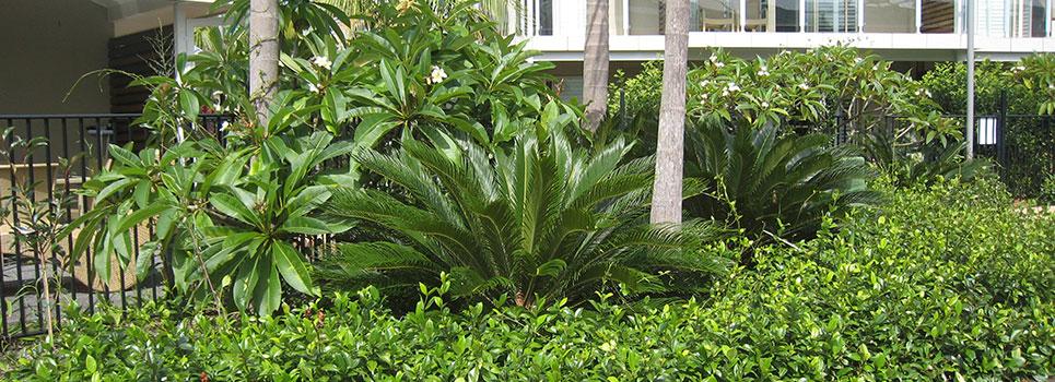 Kwikfynd Plants 38